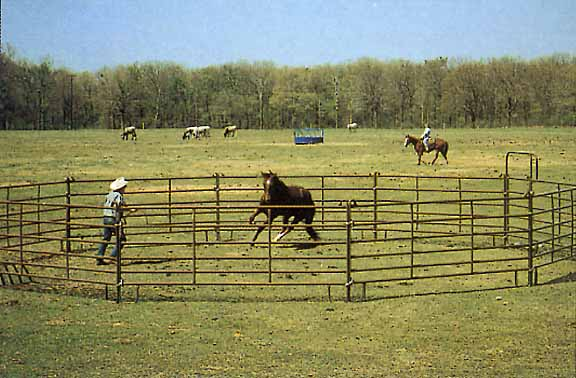Gates And Panels For Farm Use Pasturas Los Alazanes