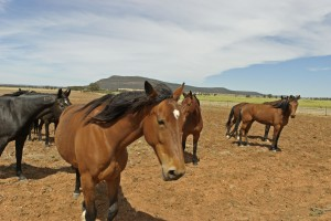 keeping your horse cool in the summer-http://www.pasturaslosalazanestx.com