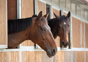 Disaster Readiness plan for Horses