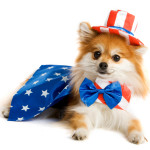 July Pet Safety Tips
